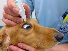 目薬の注し方