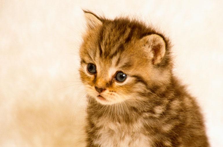 猫のワクチン
